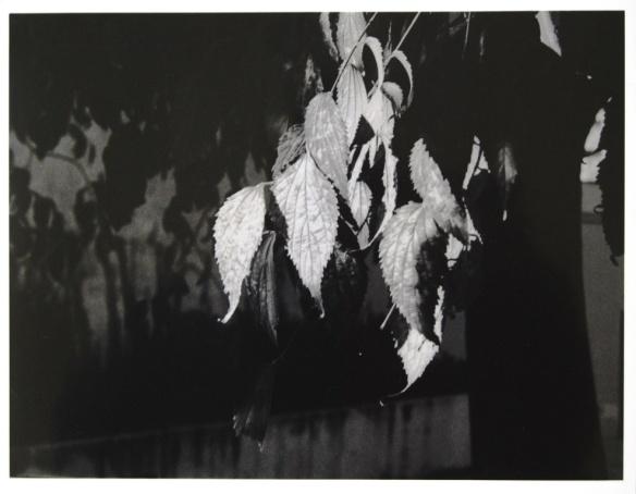 Fotografia tirada por Eva Elting, aluna AFS do 12º A, no âmbito do Atelier Livre de Fotografia com o professor José Paulo Ferro.